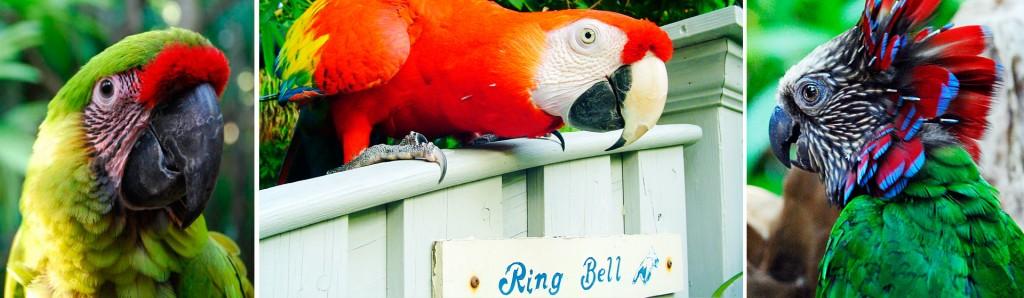 parrot-header