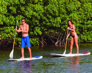 Paddle Board 1 Hour Rentals